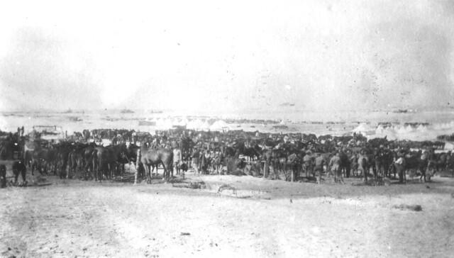 6. QODY Regiment 25 Feb 1916 near to the coast at Sidi Barrani