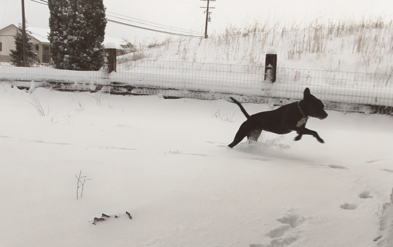 dogs-playing-in-snow-4