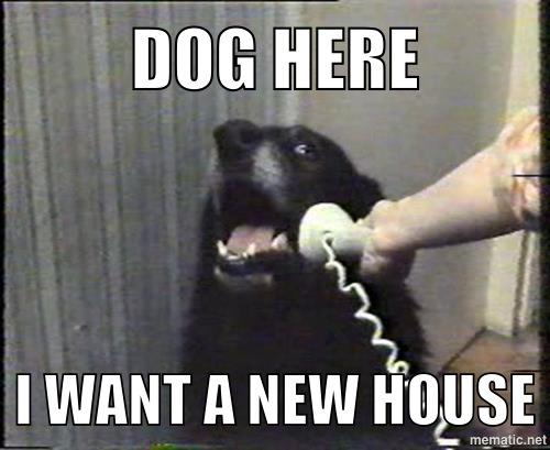 DOG HERE...
