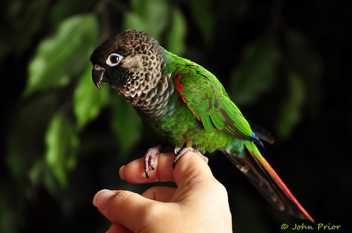 Jesper, my daughters Parrot - hand model George Costanza by John Prior 55