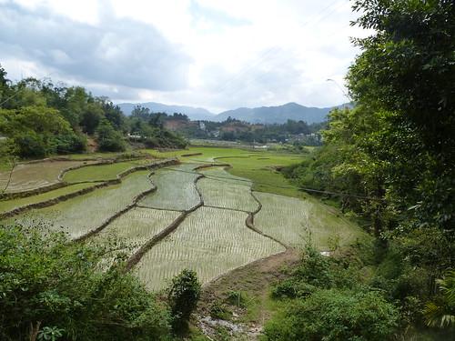 Hainan13-Wuzhishan-Montagne (105)