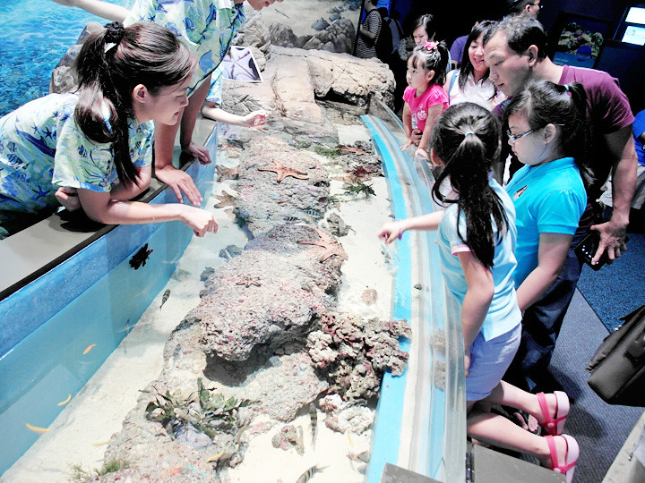 kids S.E.A. Aquarium world's largest aquarium