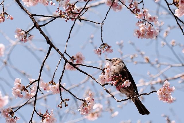 Spring Grace