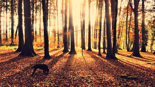 trees dog sun nature sunshine forest sunrise landscape switzerland shadows shine joy
