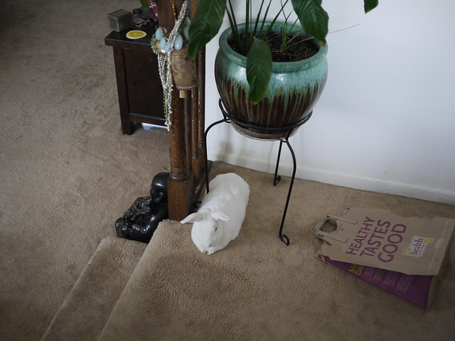 gus lying in a new spot - under the potted plant