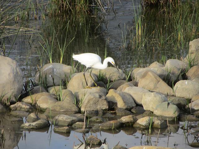 egret, so pretty
