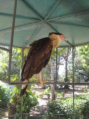 2013-01-cuba-217-camaguey-zoo
