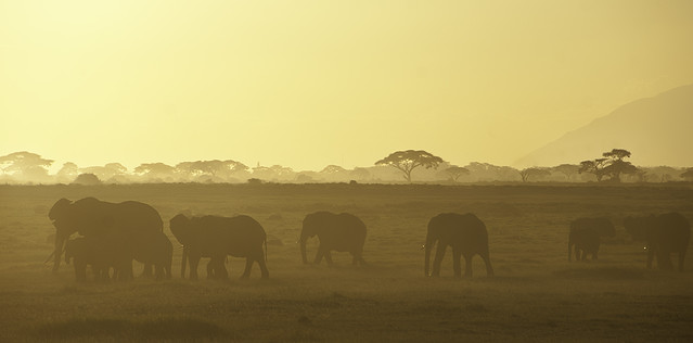 10 minutes before the sunrise in Amboseli