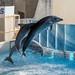 150216 Enoshima Aquarium-25.jpg