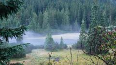 Poranna mgła w Dolinie Rybiego Potoku.