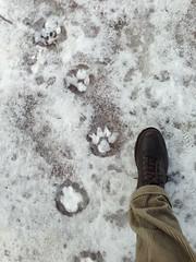 Last walk of 2012