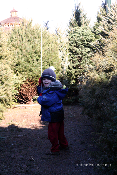 linvilla_recycled_tree_maze_4