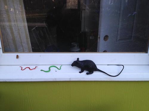 Rat vs Snakes