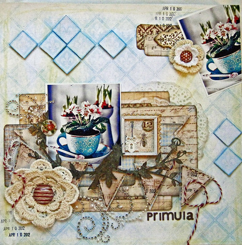 54_Primula 800px main