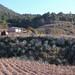 Siembra de Agave - Agave cultivation; San Pedro Teozacoalco, cerca de Yutanduchi de Guerrero, Distrito de Nochixtlán, Región Mixteca, Oaxaca, Mexico por Lon&Queta