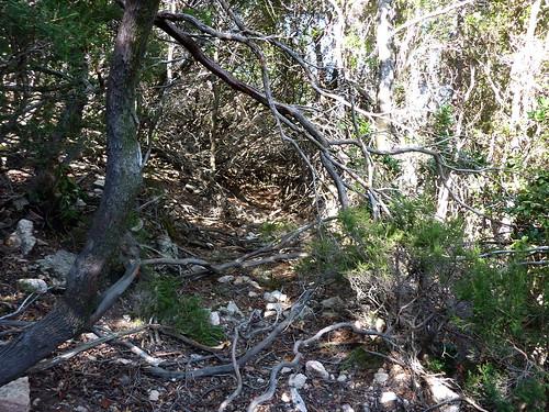 L'Ancien Chemin de la Montagne aux Plages en Haut-Cavu sous les branches d'arbousiers