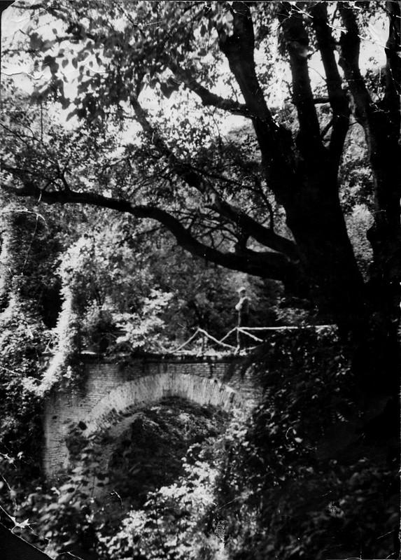 Фото 50  Старый мостик в Ботаническом саду