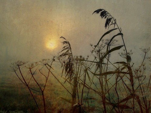 Sunrise on the Marsh by Sarah Jarrett