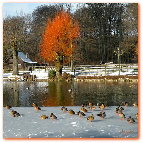 Le Lac de Sauvabelin en hiver - Sauvabelin Lake in winter by Jogabi-Michèle - back slowly