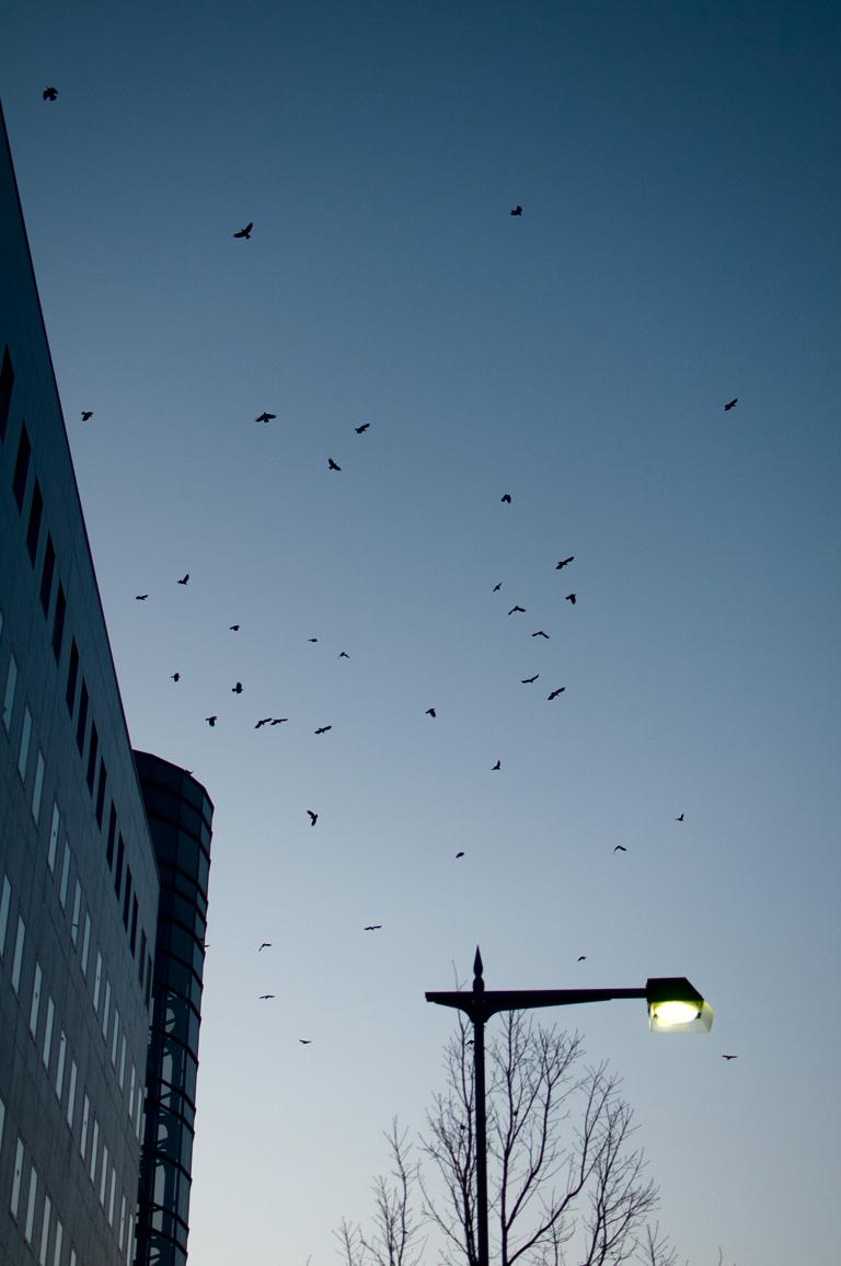 夕群れ|長野県松本市