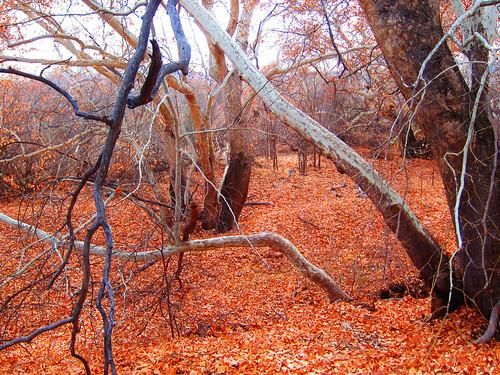 Fallen Leaves at Montezuma's Castle