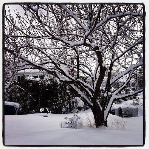 Pretty #blizzard #nemo