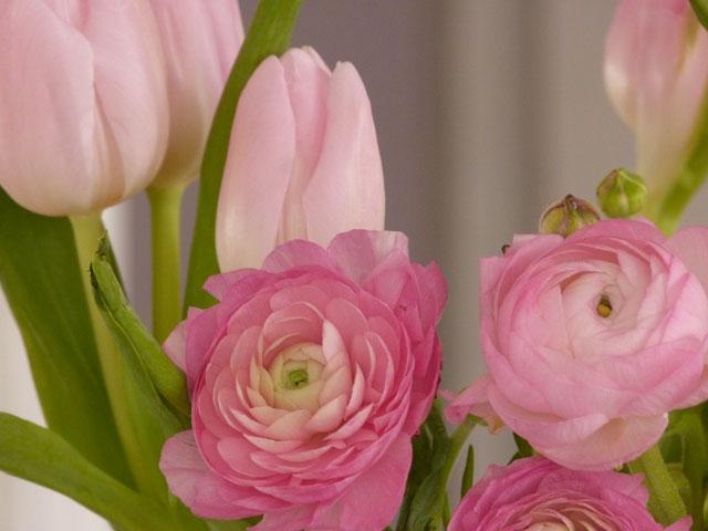 horz_pinkflowers