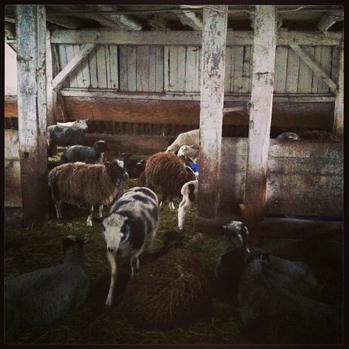Autumn House Farm