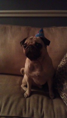 Sir Pugsley Birthday