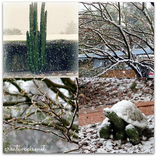 snow day in Tucson, Az