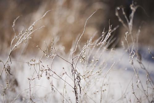 winter snow ice lawrence kansas snowday burchampark jennifernish