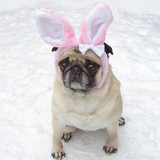Cute Pug Easter Bunny Costume