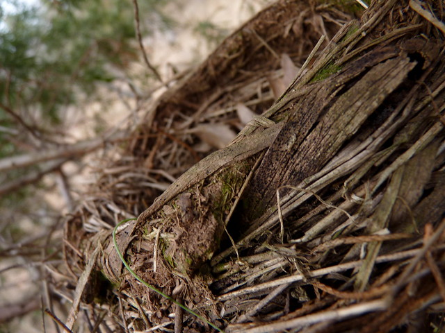 red bird nest and - photo #21