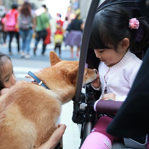更正:我來反核四、小幸福是來跟狗狗交朋友的。「牠是狗!牠反核!」#nonukes309