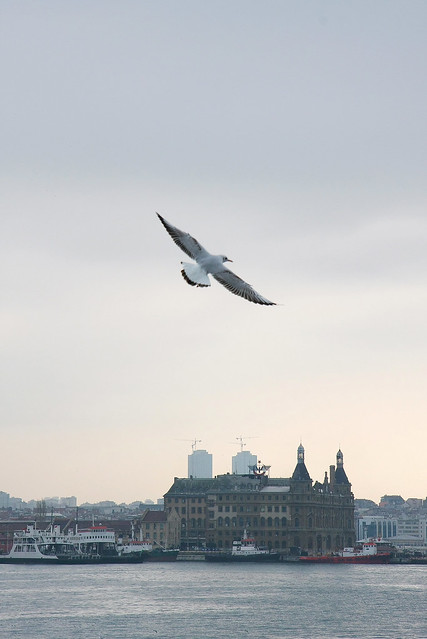 A seagull and Haydarpasa Terminal, Kadikoy, Istanbul, Turkey カドゥキョイ、ハイダルパシャ駅とカモメ