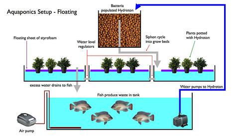 Aquaponics setup - Floating (Source: Waleed Alzuhair Flickr)