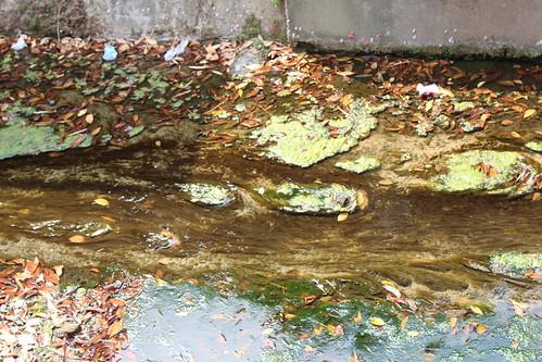 民生廢水未分流,湧泉無用武之地。