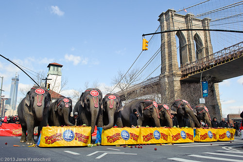 Ringling Bros in DUMBO