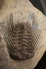 art, trilobite, fossil, stone carving, relief, close-up, rock,