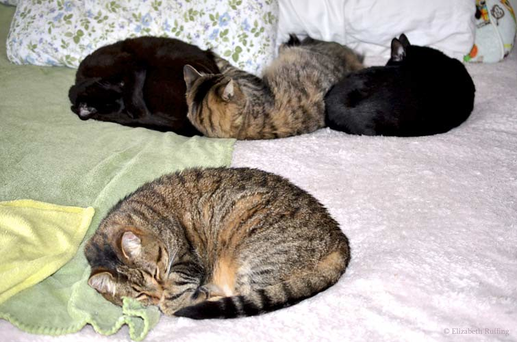 Kitty cats sleeping in a row on the bed, by Elizabeth Ruffing