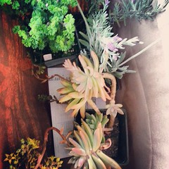 My score at the farm. #giftthatkeepsongiving #lavender #orange #succulents #homegardner