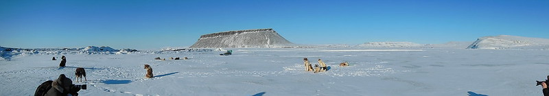Sled dogs on North Star Bay