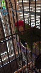 scary parrot