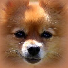 Talullah the dog