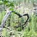 Small photo of Oksa ja taustalla Kalajanvuori