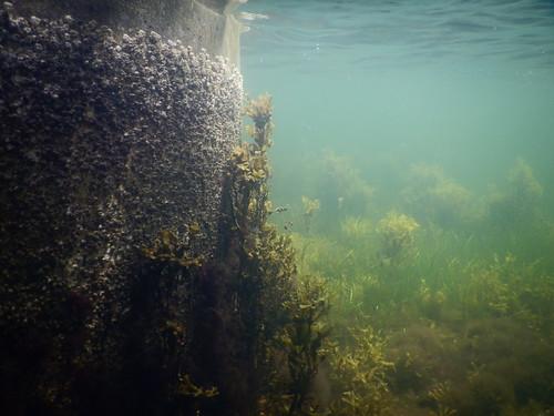 Underwater Ribersborg