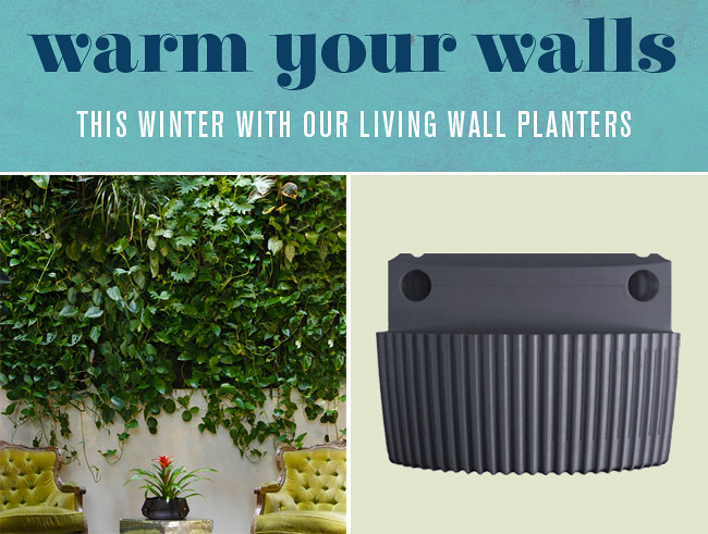 Wonderful Weu0027ve Picked Out Some Of Our Favorite Plants To Warm Your Walls This Winter  With Our Living Wall Planters. The Chinese Evergreen, Spider Plant, Pothos,  ...
