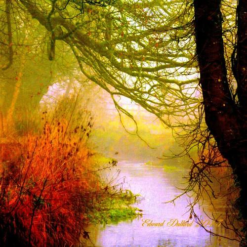 trees kilkenny ireland winter mist painterly nature fog river landscape hiver atmosphere eire photoart emeraldisle irlanda ierland edwarddullardphotographykilkennycityireland 9deanstreetkilkenny