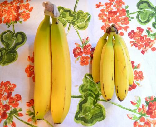 Bananas & Baby Bananas