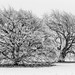 Winter at Burghley IV by chris.ashwin